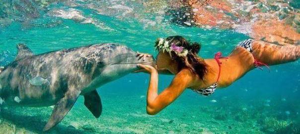 dolphin_girl
